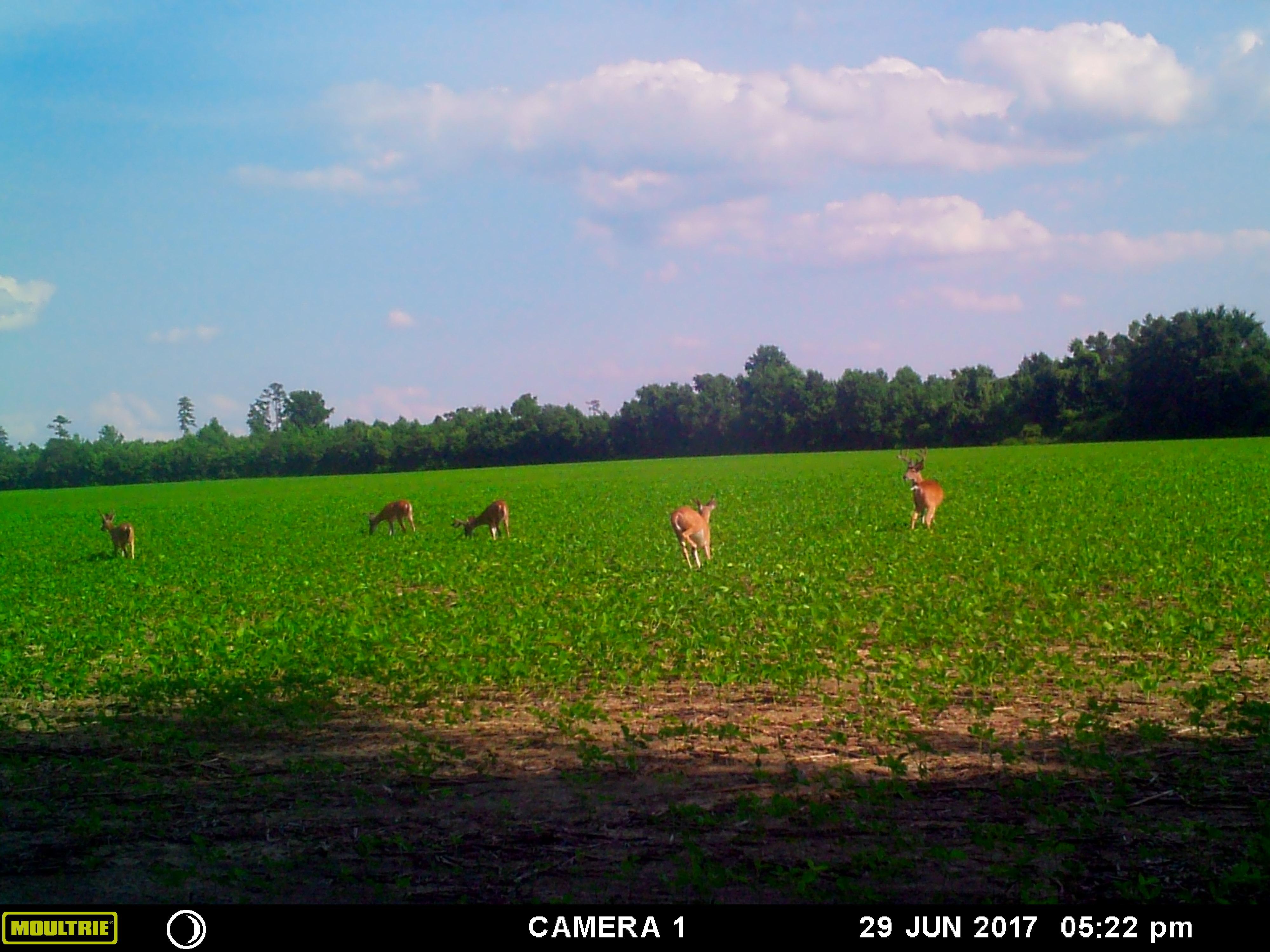 Trail Camera Photos – Twin Oaks Hunting Club